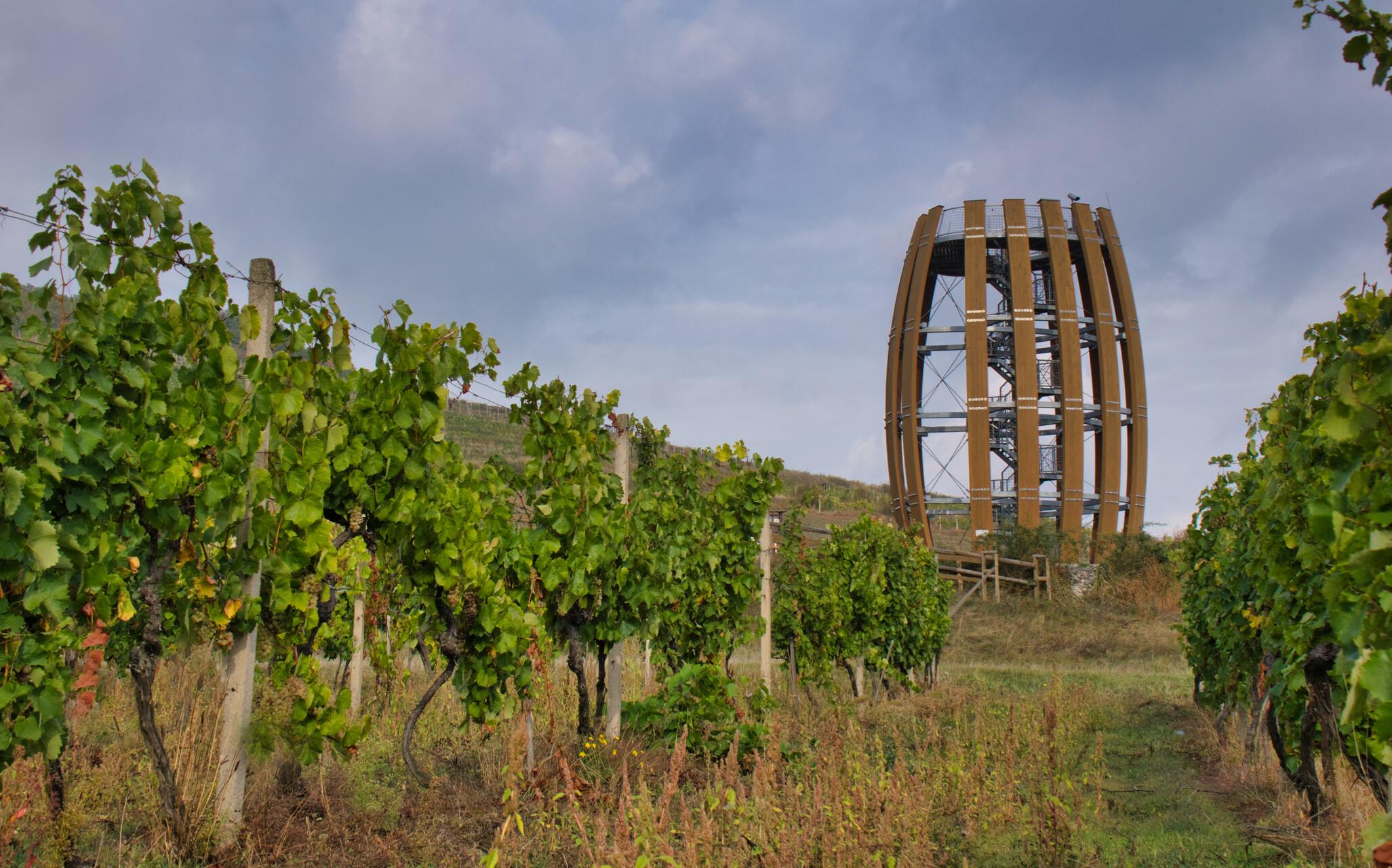 vinohradnícka oblasť tokaj